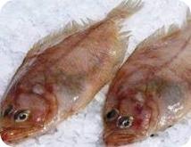 Gallo (pescado): beneficios y propiedades