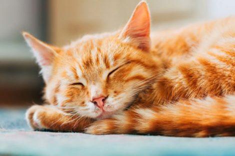 ¿Piensas adoptar un gato? Sus increíbles cualidades para tu salud