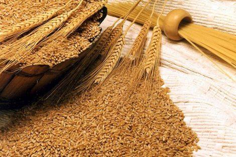 ¿Qué es el germen de trigo?