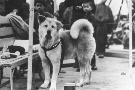 Descubre la historia de Hachikō, el perro fiel de Japón