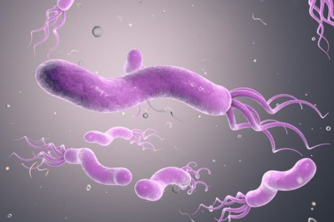 ¿Qué es la bacteria Helicobacter Pylori?: síntomas y contagio