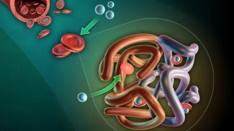 Examen de Hemoglobina Corpuscular Media