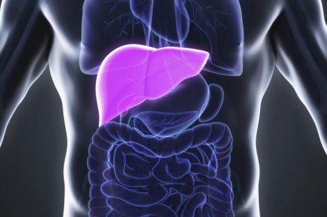 Hepatomegalia: hígado agrandado. Cuáles son sus causas y cómo se trata