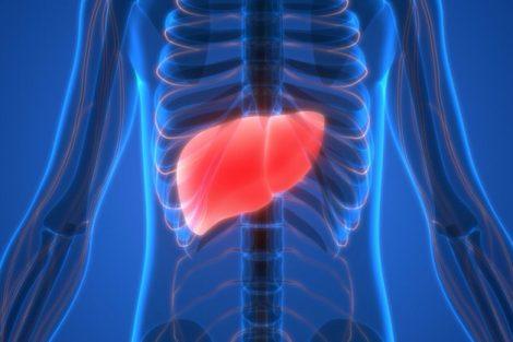 Hígado graso: qué es, síntomas, causas y tratamiento
