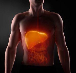 Hígado perezoso: qué es, síntomas y causas del hígado lento
