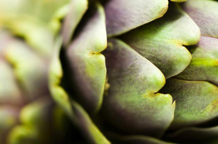 Hojas de alcachofa