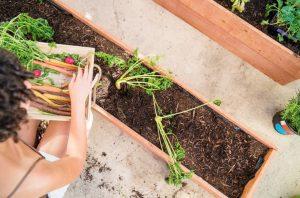 ¿Un huerto urbano ecológico en casa? Beneficios del autoconsumo sostenible