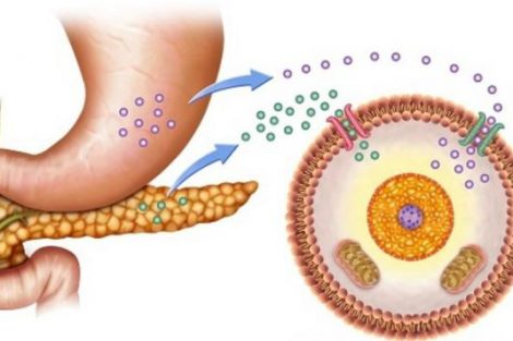 Para qué sirve la insulina: funciones principales
