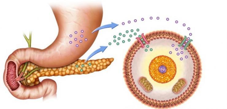 Resultat d'imatges de hormona de la insulina