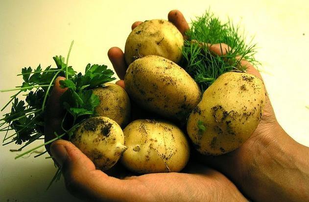 Jugo de patata cruda