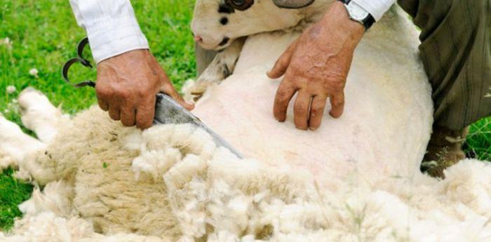 lana-piel