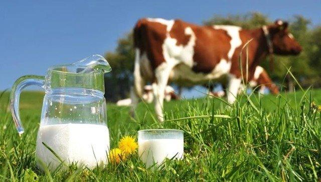 leche-animal-o-vegetal
