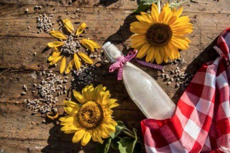 Leche de girasol: beneficios y propiedades de una bebida rica en calcio