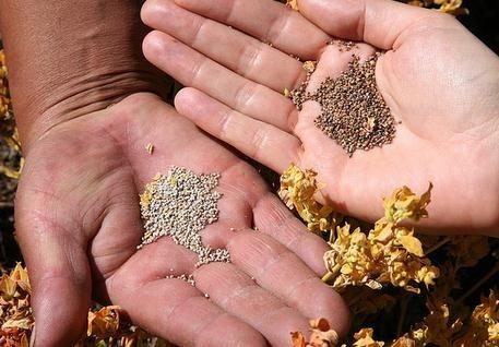 Receta de leche de quinoa