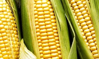 Hablamos sobre los beneficios y propiedades del maíz