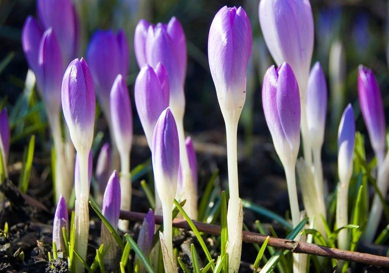Más energía en primavera