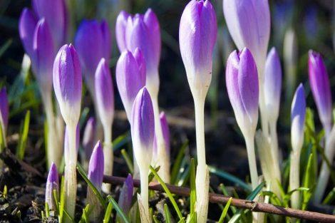 Cómo tener más energía en primavera