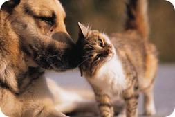 Mascotas y golpe de calor