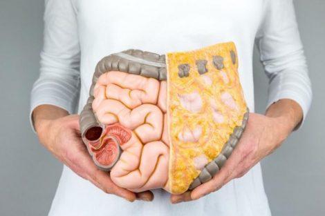 Qué es el mesenterio y para qué sirve: el 'nuevo órgano' humano