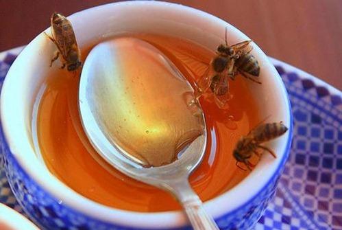 miel-picadura