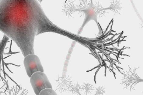 Qué es la mielina y cuáles son sus funciones