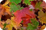 Comienzo del otoño 2014