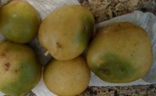 Patatas verdes con sonalina