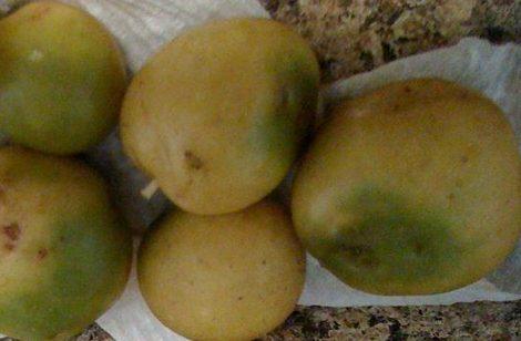 Patatas verdes y solanina