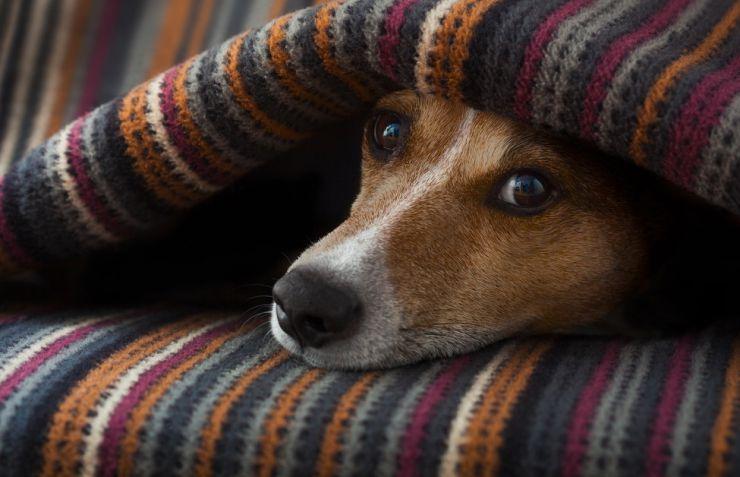 Cualidades de los perros