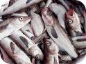 pescado-artritis