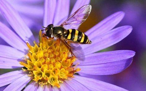 Qué hacer ante una picadura de abeja