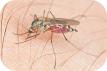 picaduras-mosquito