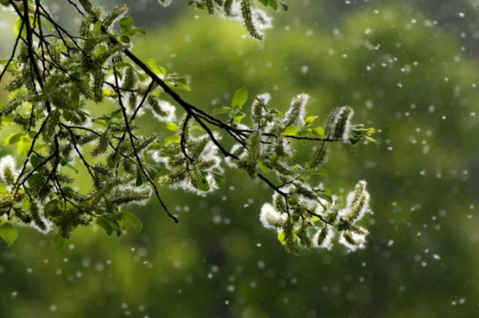 Remedios alergia al polen