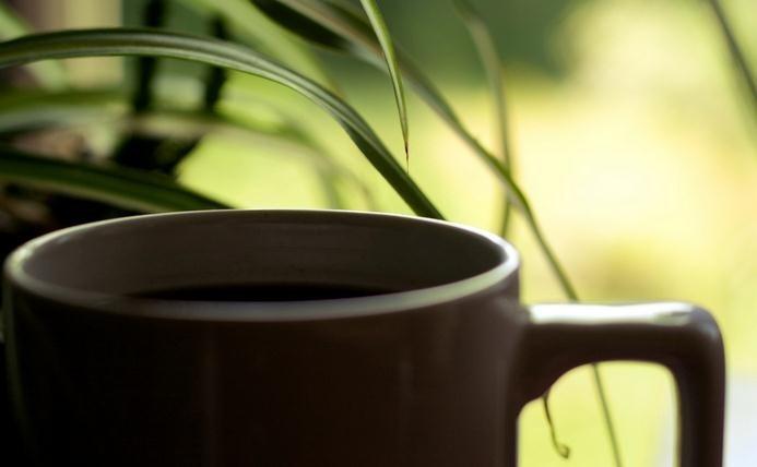 Cómo preparar café verde