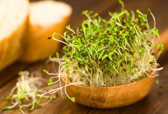 propiedades-alfalfa