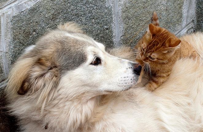 Propiedades de las mascotas