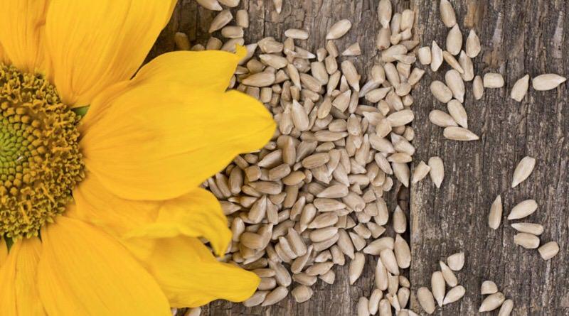 Beneficios nutritivos de las semillas de girasol