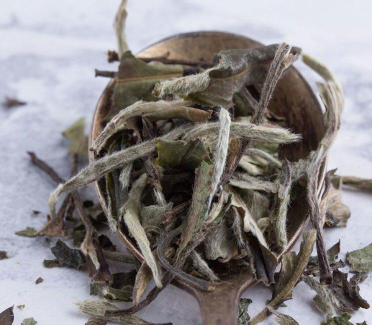 Todas las propiedades del té blanco