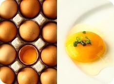 proteinas alto valor biologico