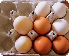 Proteínas animales: beneficios y propiedades