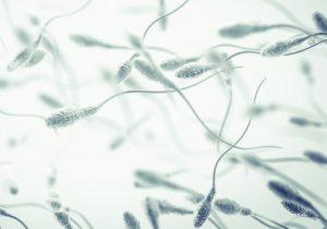 Pruebas de fertilidad masculina: tipos y en qué consisten