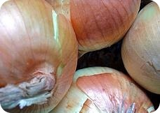 Las cebollas son ricas en quercetina
