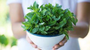 Cómo recolectar plantas y hierbas medicinales