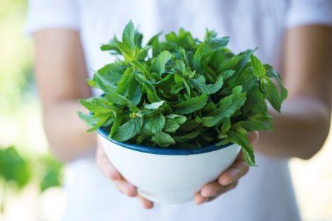 Cómo recolectar hierbas y plantas medicinales