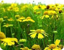 Reforzar el sistema inmunológico en primavera