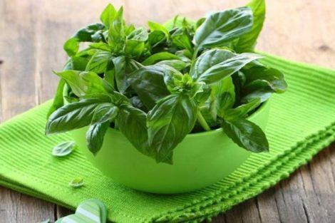 2 remedios naturales con albahaca