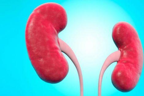 Qué son los riñones y para qué sirven: funciones principales