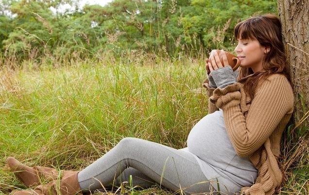 rooibos-embarazo-te