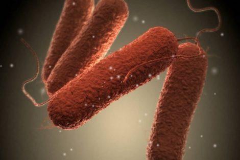 Qué es la salmonelosis y cómo se contagia
