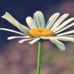 Consejos para cuidar la salud en primavera